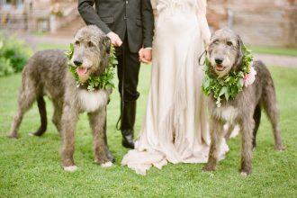 Kutyás esküvői dekorció