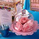 Csodaország rózsák