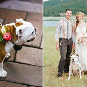 Kutya az esküvőn